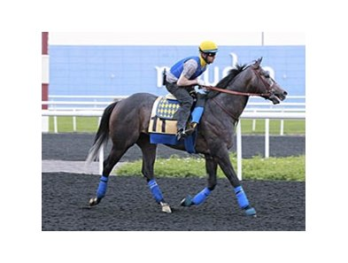 The Factor on track at Meydan on March 25.