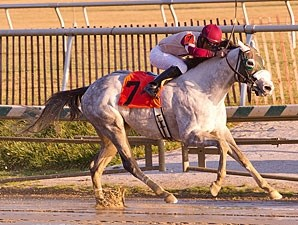Il Villano wins the 2012 Dave's Friend Stakes.
