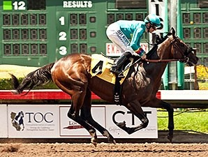 Story to Tell wins the W L Proctor Memorial Stakes.