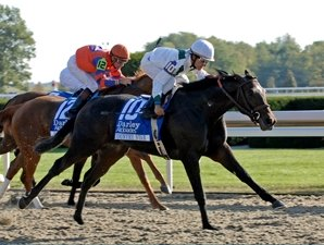 Grade I Winner Country Star Retired