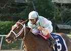 Bayakoa Stakes winner Buy The Barrel tries graded company for the first time in the Allaire DuPont Distaff Stakes.