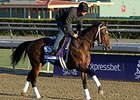 "Alpha at Santa Anita on October 30.<br><a target=""blank"" href=""http://photos.bloodhorse.com/BreedersCup/2013-Breeders-Cup/Breeders-Cup/32986083_QMHXWK#!i=2871593779&k=KtkbHBV"">Order This Photo</a>"