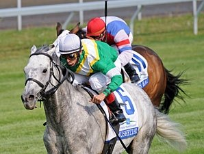 Musketier to Adena Springs Canada