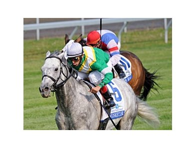 "Musketier and John Velazquez take the Elkhorn over Brass Hat.<br><a target=""blank"" href=""http://www.bloodhorse.com/horse-racing/photo-store?ref=http%3A%2F%2Fpictopia.com%2Fperl%2Fgal%3Fprovider_id%3D368%26ptp_photo_id%3D8919186%26ref%3Dstory"">Order This Photo</a>"