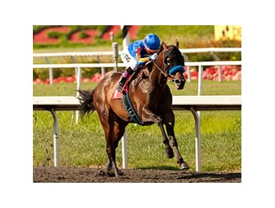 Game On Dude dominates the Californian Stakes at Hollywood Park.