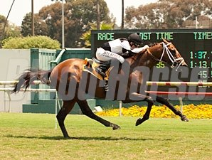Tale of a Champion wins the 2013 Charles Whittingham Memorial.