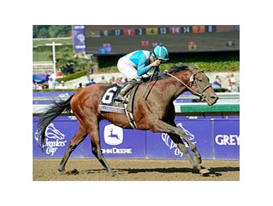 "2012 Breeders' Cup Marathon winner Calidoscopio won last year's Clasico Belgrano.<br><a target=""blank"" href=""http://photos.bloodhorse.com/BreedersCup/2012-Breeders-Cup/Marathon/26130229_MsH7Ls#!i=2192123925&k=VftDMwK"">Order This Photo</a>"