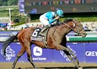 "Calidoscopio won the 2012 BC Marathon by 4 1/4 lengths.<br><a target=""blank"" href=""http://photos.bloodhorse.com/BreedersCup/2012-Breeders-Cup/Marathon/26130229_MsH7Ls#!i=2192123925&k=VftDMwK"">Order This Photo</a>"
