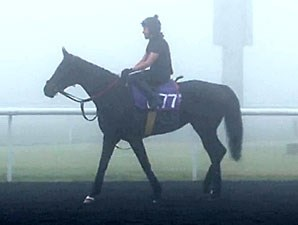 Side Glance (GB) preps for the Dubai World Cup at Meydan 3/6/2014.