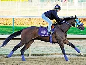 Jaycito Horse Profile Bloodhorse