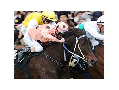 "Black Caviar  <br><a target=""blank"" href=""http://photos.bloodhorse.com/AtTheRaces-1/at-the-races-2012/22274956_jFd5jM#!i=1934910495&k=zQQ7Vg5"">Order This Photo</a>"