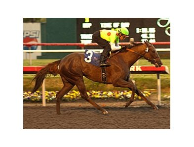 Moccasin winner Made To Love Her drew the rail for the Santa Ynez.