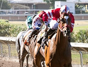 Positive Response wins the 2013 County of Alameda Handicap.