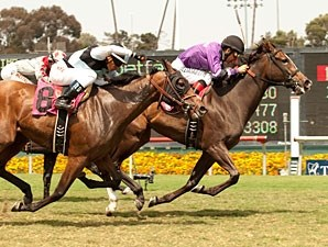 Kinz Funky Monkey wins the 2013 Manhattan Beach Stakes.
