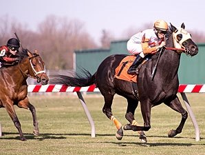 Ben's Cat Wins Fourth Mister Diz in a Row
