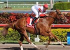 "Notonthesamepage will make his next start in the Fountain of Youth. <br><a target=""blank"" href=""http://www.bloodhorse.com/horse-racing/photo-store?ref=http%3A%2F%2Fgallery.pictopia.com%2Fbloodhorse%2Fgallery%2FS631106%2Fphoto%2F7300633%2F%3Fo%3D0"">Order This Photo</a>"