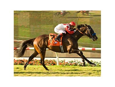"Multiple graded stakes winner Spring House leads the field for the San Luis Rey Handicap.<br><a target=""blank"" href=""http://www.bloodhorse.com/horse-racing/photo-store?ref=http%3A%2F%2Fpictopia.com%2Fperl%2Fgal%3Fprovider_id%3D368%26ptp_photo_id%3D5636563%26ref%3Dstory"">Order This Photo</a>"