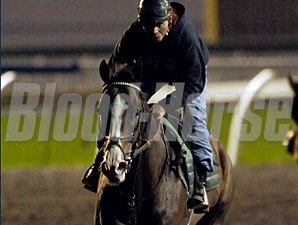Courageous Cat - Woodbine, September 17, 2011.