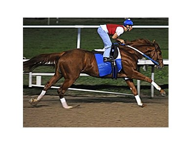 Curlin continues to progress towards his first race of 2008.