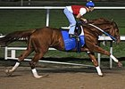 Curlin will make his first two starts of 2008 in Dubai.
