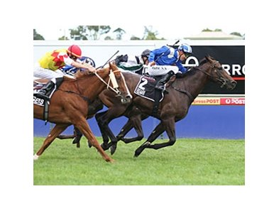 Reaan emerges from the pack to take the Blue Diamond Stakes.