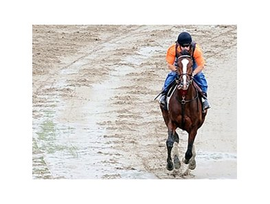 Denis of Cork galloped 1 1/4 miles on Belmont's main track June 5.