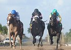 "Confrontation (center) finished 2nd in the Hal's Hope on Jan. 10.<br><a target=""blank"" href=""http://photos.bloodhorse.com/AtTheRaces-1/At-the-Races-2015/i-hBM4PDZ"">Order This Photo</a>"