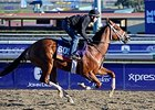 "Tightend Touchdown <br><a target=""blank"" href=""http://photos.bloodhorse.com/BreedersCup/2013-Breeders-Cup/Breeders-Cup/32986083_QMHXWK#!i=2873730500&k=nh6Z9Tg"">Order This Photo</a>"