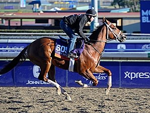 Tightend Touchdown - 2013 Breeders' Cup, October 31, 20123.