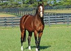 Union Rags at Lane's End Farm.