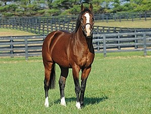 Union Rags at Lane's End Farm 2012.