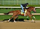 "Golden Soul<br><a target=""blank"" href=""http://photos.bloodhorse.com/TripleCrown/2013-Triple-Crown/Kentucky-Derby-Workouts/29026796_jvcnn8#!i=2478246258&k=MKmrPNW"">Order This Photo</a>"