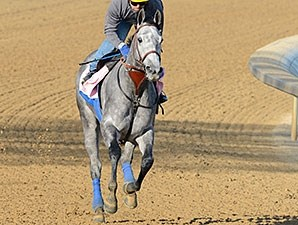 Midnight Lucky works at Churchill Downs 4/21/2013.