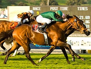 Gio Ponti wins the 2009 Kilroe Mile.