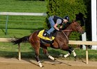 "Mine That Bird drew post 7 and was installed the 2-1 morning-line favorite for the Belmont Stakes.<br><a target=""blank"" href=""http://www.bloodhorse.com/horse-racing/photo-store?ref=http%3A%2F%2Fpictopia.com%2Fperl%2Fgal%3Fprovider_id%3D368%26ptp_photo_id%3D8185223%26ref%3Dstory"">Order This Photo</a>"