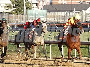 Wine Princess wins the 2013 Falls City Handicap.