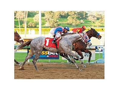 Tweebster, gray, in the San Fernando Stakes.