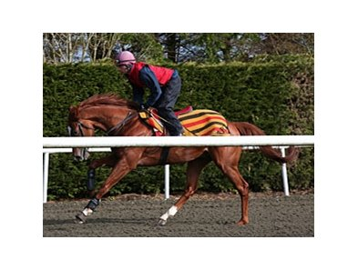 Daddy Long Legs works at Ballydoyle.