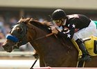 "Warning Zone win in the July 13 Sunset Breeders' Cup Handicap (gr. IIT) was his third victory over the Hollywood Park Turf course. <br><a target=""blank"" href=""http://www.bloodhorse.com/horse-racing/photo-store?ref=http%3A%2F%2Fpictopia.com%2Fperl%2Fgal%3Fprovider_id%3D368%26ptp_photo_id%3D5116195%0D%0A%26ref%3Dstory"">Order This Photo</a>"