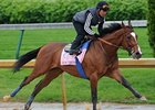 Plum Pretty Lands in Hollywood Oaks