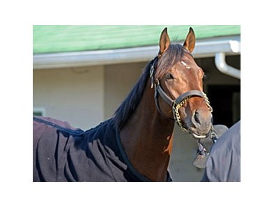 Orb