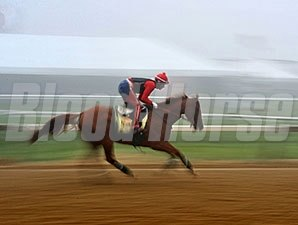 California Chrome jogs at Pimlico - May 15, 2014