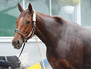 Groupie Doll at Belmont, November 16, 2013.