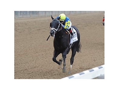 "Shanghai Bobby<br><a target=""blank"" href=""http://photos.bloodhorse.com/AtTheRaces-1/at-the-races-2012/22274956_jFd5jM#!i=2133401086&k=rBS5Mbx"">Order This Photo</a>"