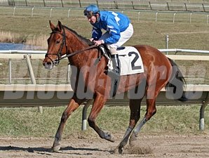 Harissa wins the 2011 Langhorne Stakes.