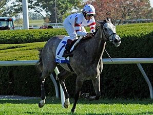 Juv Filly Turf: Race Without a View