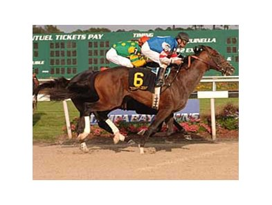 Tampa Bay Derby (gr. III) winner Big Truck is finally turning top works into wins.