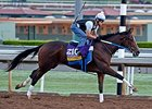 "Untapable <br><a target=""blank"" href=""http://photos.bloodhorse.com/BreedersCup/2014-Breeders-Cup/Works/i-NZ3cvQT"">Order This Photo</a>"