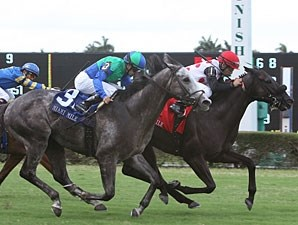 Successful Mission wins the 2011 Miami Mile.