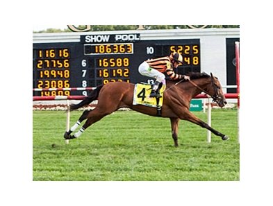2012 Arlington Million winner Little Mike seeks a repeat on Aug. 17.
